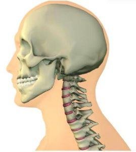 skeleton depicting Chiropractic Neck Adjustments